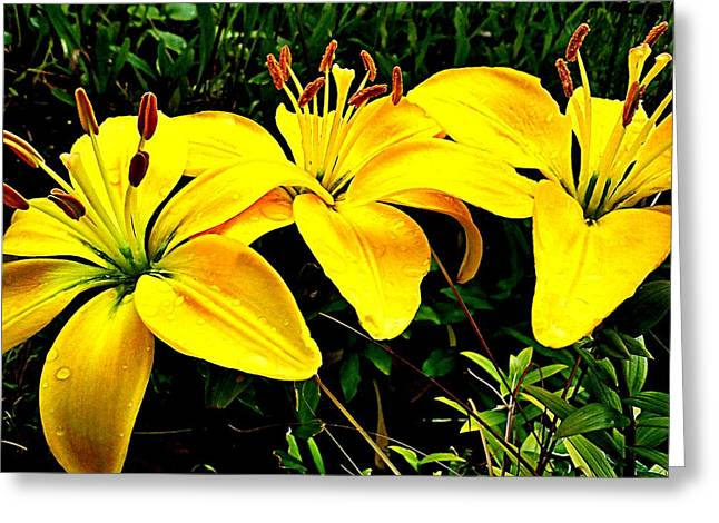 Yellow Triad Of Lilies Greeting Card by Kevin D Davis