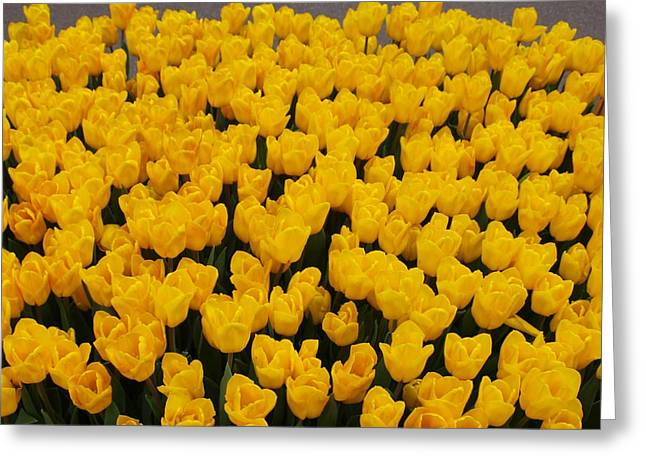 Yellow Tulips Greeting Card by Larry Krussel