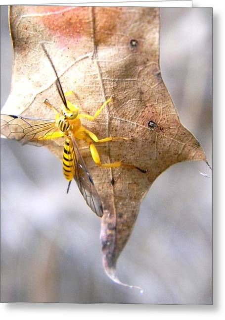 Yellow Wasp Greeting Card by Warren Thompson
