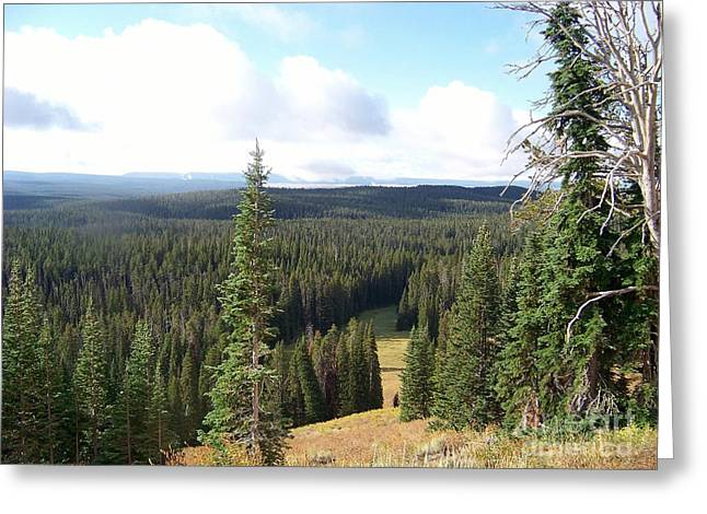 Yellowstone High Elevation Forest Greeting Card by Charles Robinson