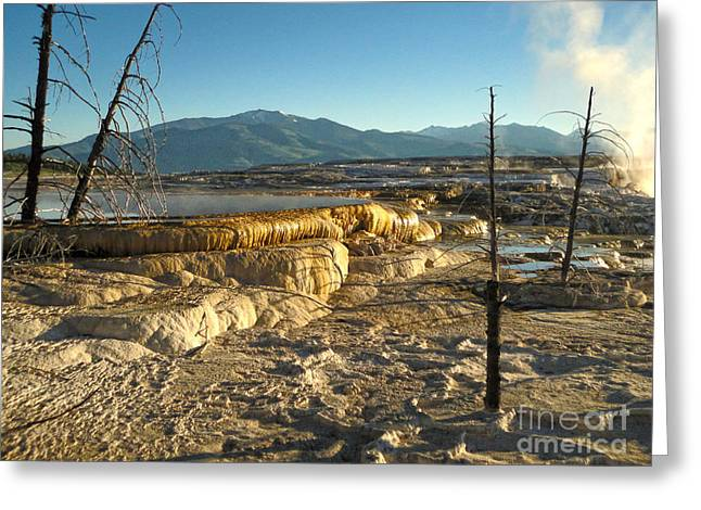 Yellowstone National Park - Minerva Terrace - 10 Greeting Card by Gregory Dyer