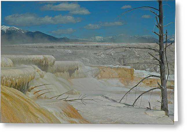 Yellowstone's Canary Springs Greeting Card by Bruce Gourley