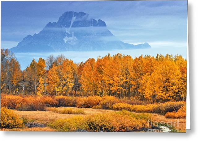 Yelow And Orange Autumn Grand Teton National Park Greeting Card