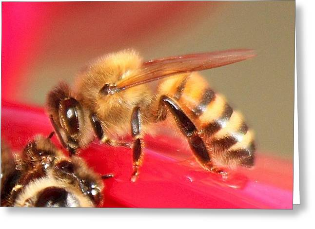 Yet Another Bee Greeting Card