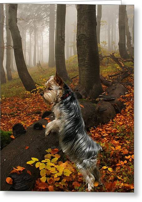 Yorkie On The Hunt Greeting Card
