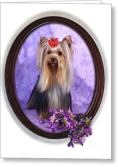 Yorkie With Violets Greeting Card by Maxine Bochnia
