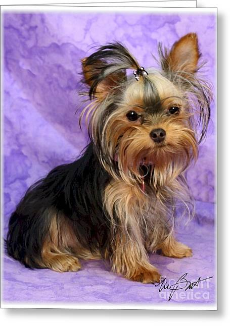 Yorkshire Terrier Pup Greeting Card by Maxine Bochnia