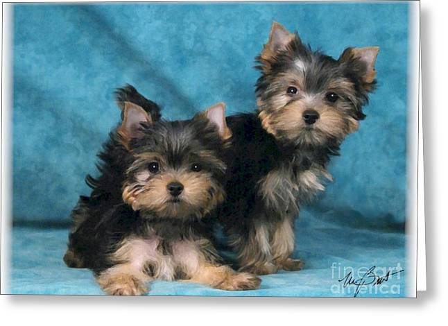 Yorkshire Terrier Pups 3 Greeting Card by Maxine Bochnia
