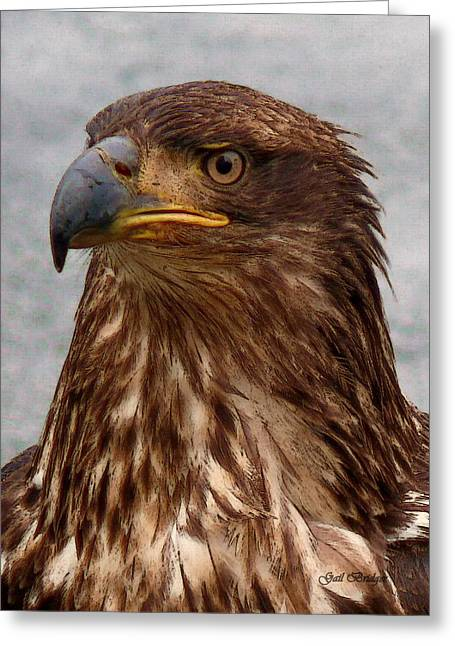 Young Bald Eagle Portrait Greeting Card