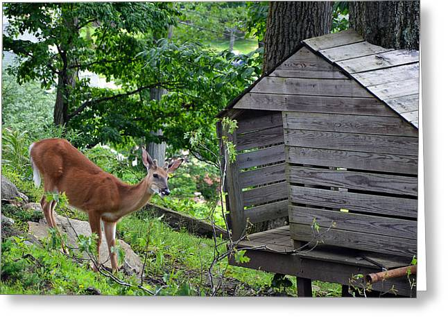 Greeting Card featuring the photograph Young Buck At Treehouse Hopatcong by Maureen E Ritter