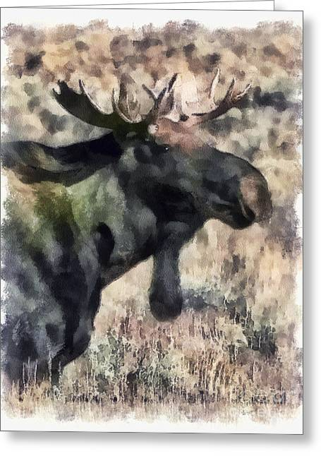 Young Bull Moose Greeting Card by Clare VanderVeen
