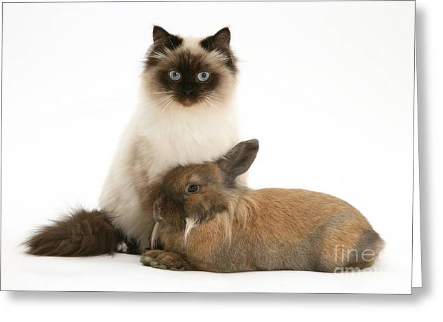 Young Cat And Rabbit Greeting Card