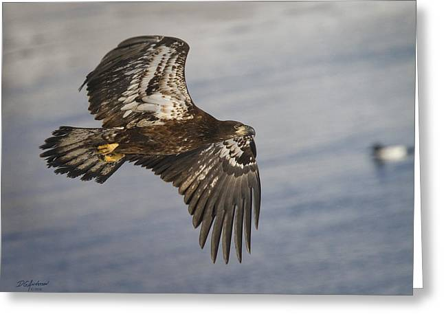Young Eagle  Duck 3 O'clock Greeting Card