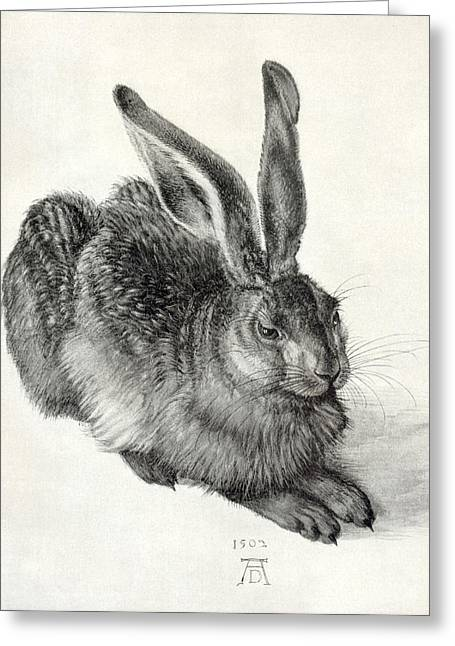Young Hare, By Durer Greeting Card by Sheila Terry