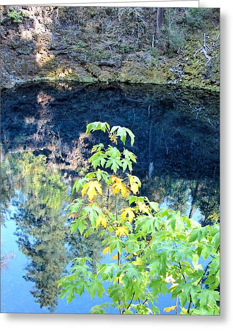 Young Maple At Blue Pool Greeting Card