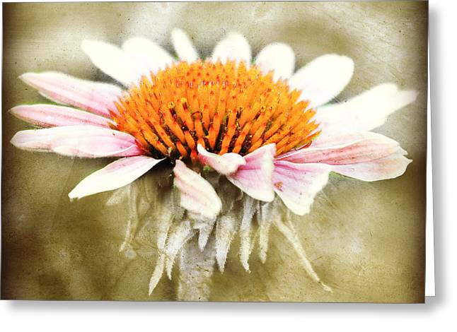 Young Petals Greeting Card by Julie Hamilton