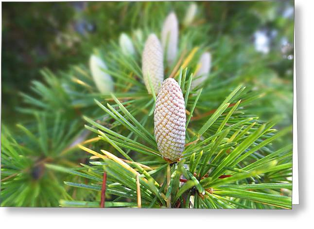 Greeting Card featuring the photograph Young Pine Cones by Anne Mott