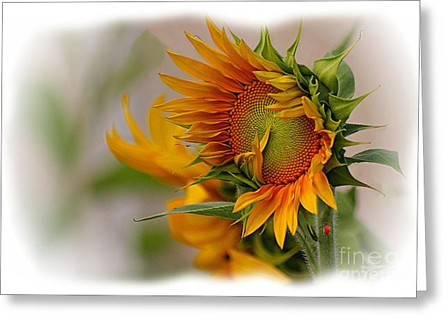 Young Sunburst Greeting Card by John  Kolenberg