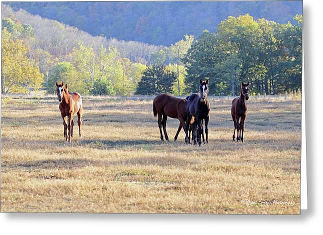 'youngsters In The Paddock' Greeting Card by PJQandFriends Photography