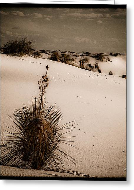 White Sands, New Mexico - Yucca Greeting Card