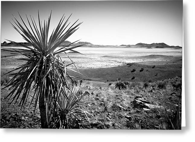 Yucca With A View Greeting Card