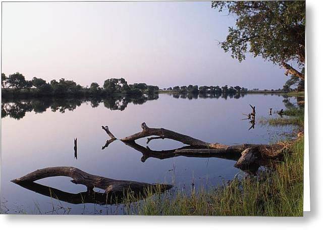 Zambesi River Greeting Card by Axiom Photographic