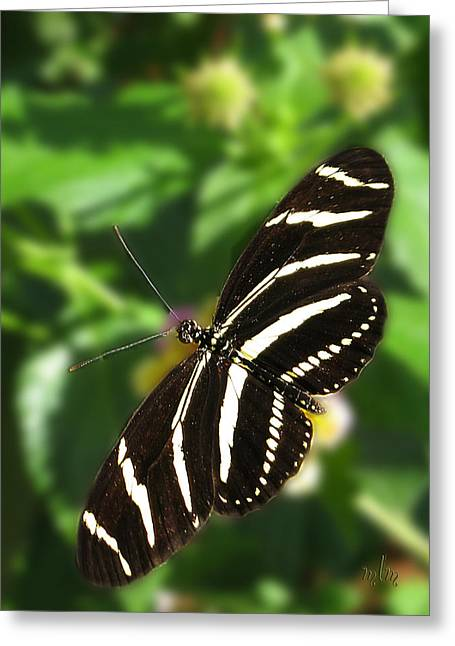 Zebra Heliconian Butterfly 1 Greeting Card