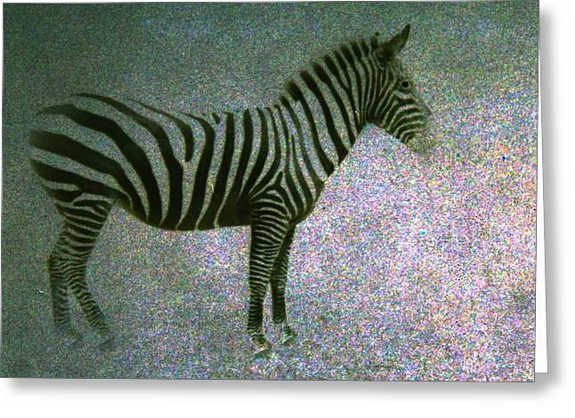 Greeting Card featuring the photograph Zebra by Kelly Hazel