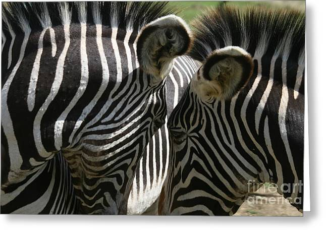 Zebra Lovers Greeting Card by Carol Wright