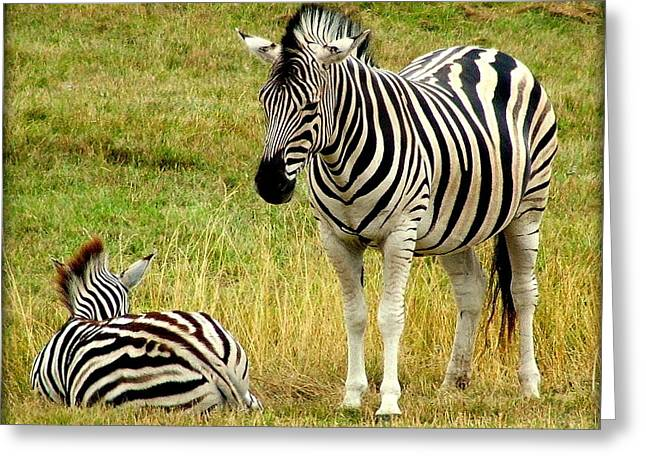 Zebra Mother And Baby Greeting Card by Judy Garrett
