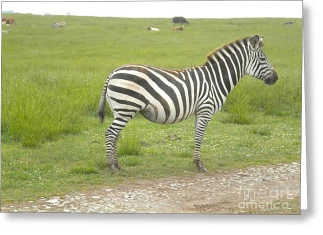 Zebra Print Greeting Card by Tessa Priddy