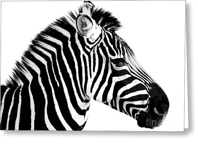 Zebra Greeting Card by Rebecca Margraf
