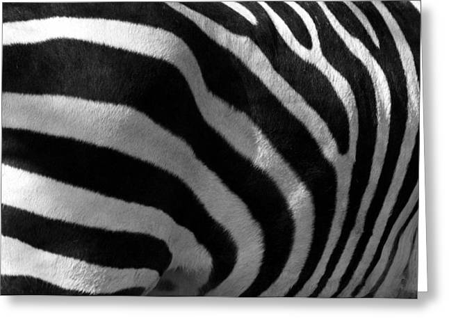 Greeting Card featuring the photograph Zebra Stripes by Cindy Haggerty
