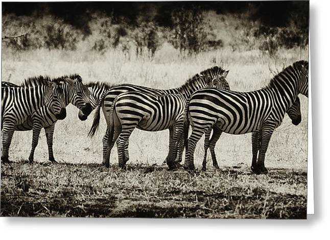 Zebras In A Row Greeting Card by Jess Easter