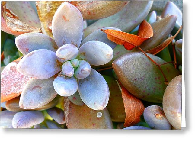 Zen Garden Greeting Card by Sandrine Pelissier