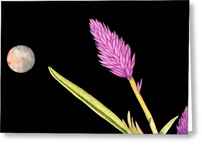 Zen Moon Greeting Card by Norm Holmberg