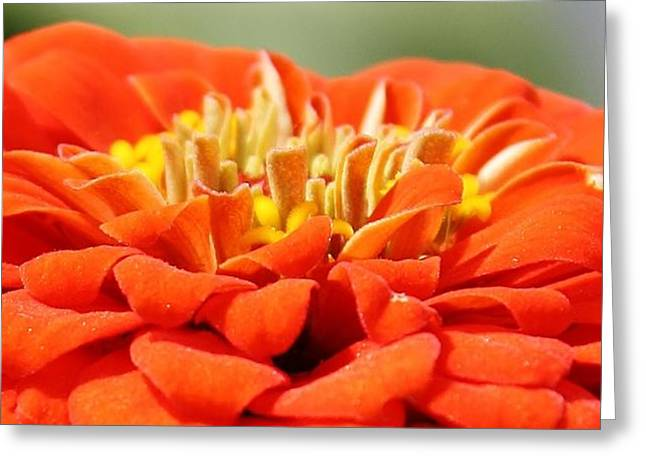Zinna Up Close Greeting Card by Bruce Bley