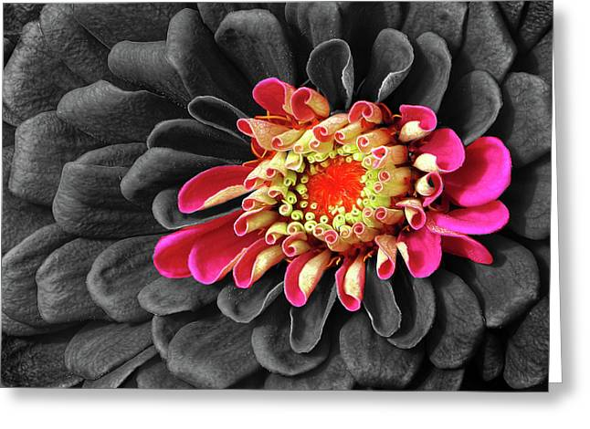 Zinnia Greeting Card by Dave Mills
