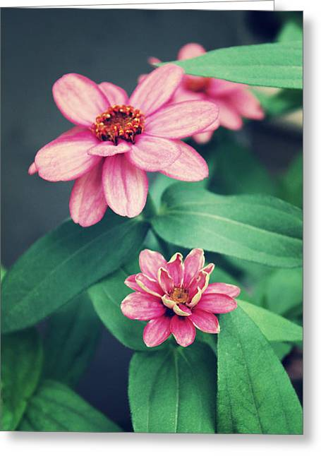 Zinnias Greeting Card by Cathie Tyler
