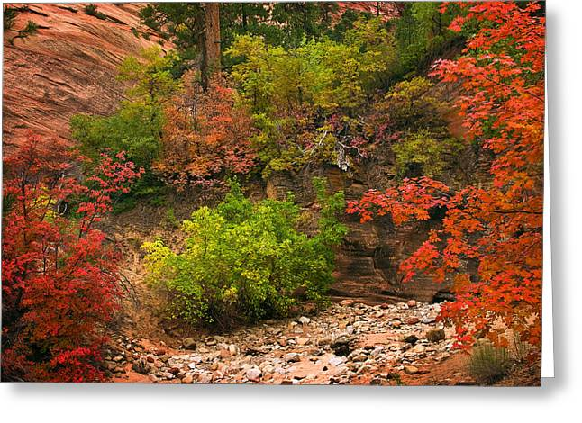 Zion Fall Colors Greeting Card by Dave Dilli