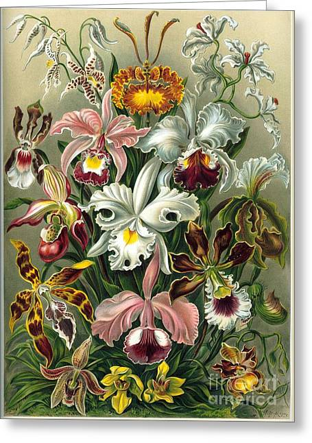 A Lithographic Color Plate From Ernst  Greeting Card by MotionAge Designs