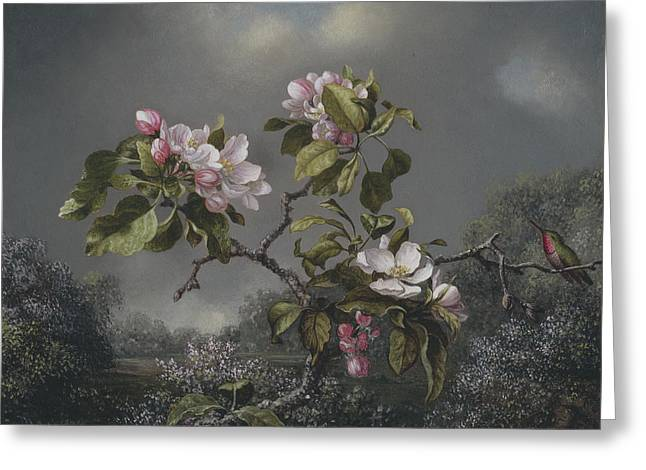 Apple Blossoms And Hummingbird Greeting Card