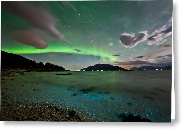 Auroras And Dinoflagellates Greeting Card