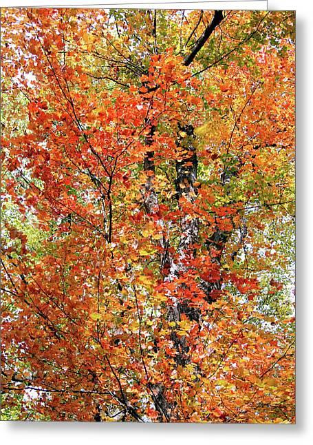 Autumn Confetti Greeting Card