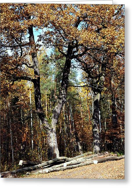 Autumn In Forest Greeting Card by Henryk Gorecki