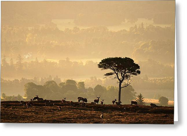 Autumn Morning, Strathglass Greeting Card