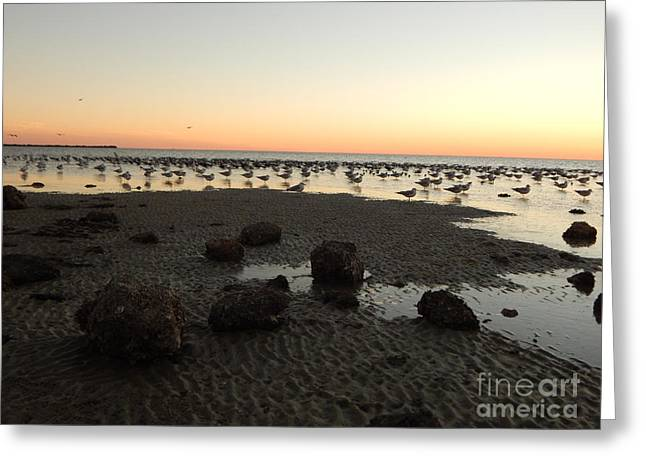 Beach Rocks Barnacles And Birds Greeting Card by Expressionistart studio Priscilla Batzell
