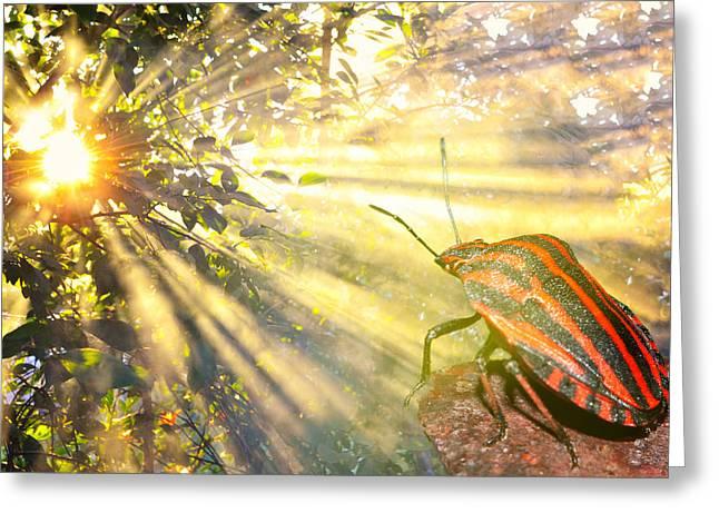 Beetle Enjoying Sunshine Greeting Card by Natalya Myachikova