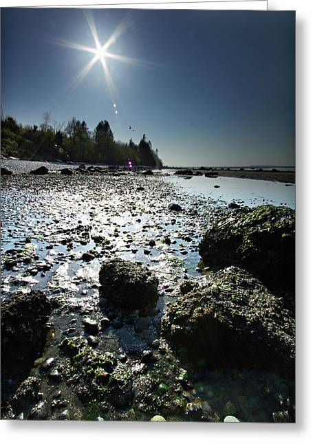 Birch Bay Beach Wa Greeting Card by DMSprouse Art