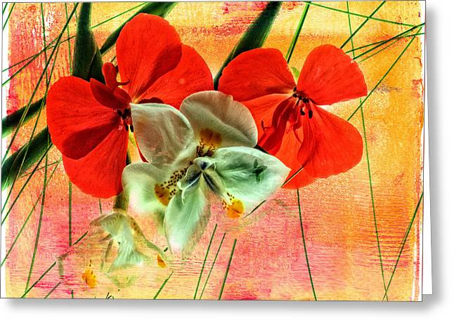 Bougainvillea And Paper White Greeting Card